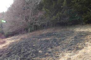 Denuncia ambientalista: «Un altro incendio doloso, il Cansiglio è ancora sotto attacco»