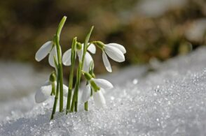 Primavera in anticipo: weekend con zero termico oltre i 3.000 metri