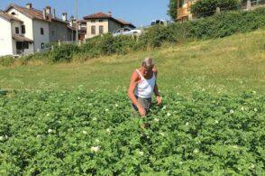 """Alto gradimento per gli """"Orti comuni"""": ben 27 le richieste da pollice verde"""