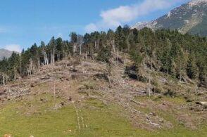 """Belluno, prima provincia """"carbon neutral"""" dell'arco alpino: al via il progetto"""