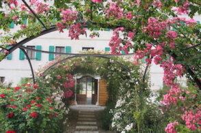 Foto di fiori, racconti di vita. Al via #storiedirose, contest del Museo di Seravella