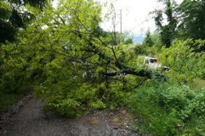 «Taglio piante a bordo strada importante per la sicurezza»: Giannone si appella al senso civico
