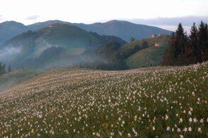Rispetto della biodiversità e tutela del territorio: nasce un'alleanza strategica