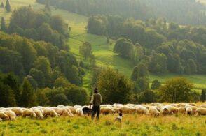 La leggenda del mese pazzo: Marzo, il pastore e il suo gregge