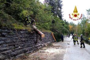 Qualche albero in strada, ma il peggio è passato: condizioni meteo in miglioramento