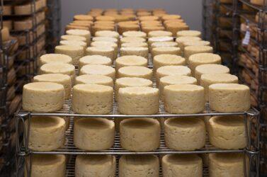 Sapori della montagna, a Villa Patt il concorso dei formaggi di malga