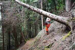 Centro servizi, miglioramenti boschivi e dei sentieri: il Nevegal si rifà il trucco