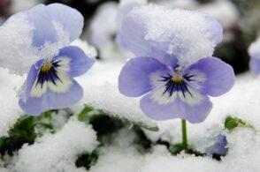 Un tocco di primavera nel cuore dell'inverno: è San Sebastiano