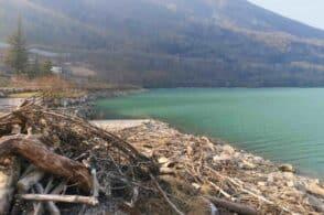 Detriti nel lago di Santa Croce: gran parte del materiale è spiaggiato