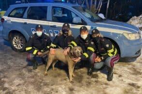 Solo e infreddolito per strada: labrador salvato dagli agenti di Polizia