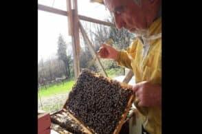 Bruno, dai cantieri edili alla natura: «Ora, a 80 anni, imparo dalle api»