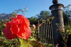 300 piante che raccontano storie del territorio: il giardino delle rose di Seravella