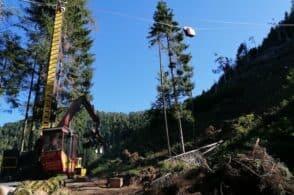 Prelevati dai boschi in pochi mesi i quantitativi di legna di 8 atti: è l'effetto Vaia