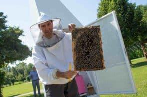 Il progetto a tutela delle api diventa internazionale: Belluno fa scuola