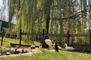 Fattoria del Piave: una faina divora 40 capi di pollame