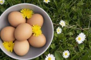 L'eccellenza agroalimentare bellunese studiata dalla Ca' Foscari