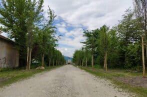 Dopo Vaia 50 piante di carpino per il nuovo volto del viale del cimitero